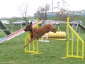 saba (ella's sister) on agility