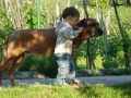 our max(1,3 years old) & tavi(ella's brother) on may 2010.