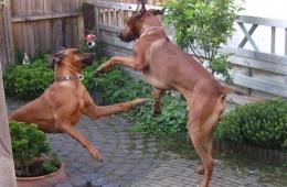 ella & nelson playing