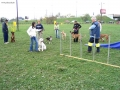 our group on agility course