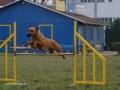 kiya on agility training on december 2007.