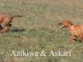 askari & azikiwe