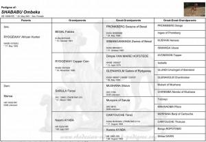 "pedigree of Shababu Ombeka – ""Ella"""